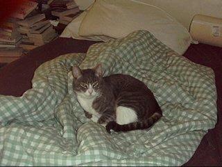 Clem - July 2000