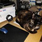 Still desk-bound...